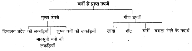RBSE Solutions for Class 11 Indian Geography Chapter 8 भारत की प्राकृतिक वनस्पति