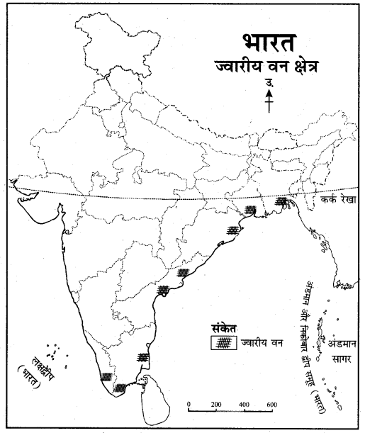 RBSE Solutions for Class 11 Indian Geography Chapter 8 भारत की प्राकृतिक वनस्पति 5