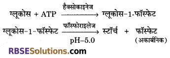 RBSE Solutions for Class 12 Biology Chapter 7 वाष्पोत्सर्जन व बिन्दुस्राव 8