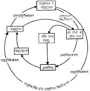 RBSE Solutions for Class 9 Science Chapter 13 पर्यावरण 1