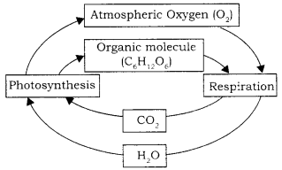 RBSE Solutions for Class 9 Science Chapter 13 Environment 2