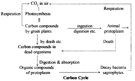 RBSE Solutions for Class 9 Science Chapter 13 Environment 4