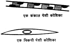 RBSE Solutions for Class 9 Science Chapter 6 सजीव की संरचना 10