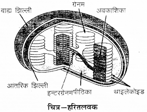 RBSE Solutions for Class 9 Science Chapter 6 सजीव की संरचना 14
