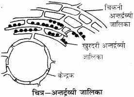 RBSE Solutions for Class 9 Science Chapter 6 सजीव की संरचना 15