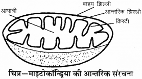 RBSE Solutions for Class 9 Science Chapter 6 सजीव की संरचना 16