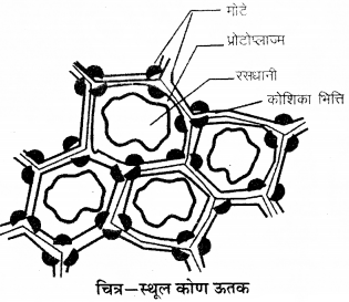 RBSE Solutions for Class 9 Science Chapter 6 सजीव की संरचना 18