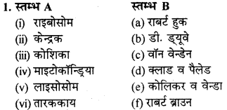 RBSE Solutions for Class 9 Science Chapter 6 सजीव की संरचना 23