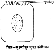 RBSE Solutions for Class 9 Science Chapter 6 सजीव की संरचना 24