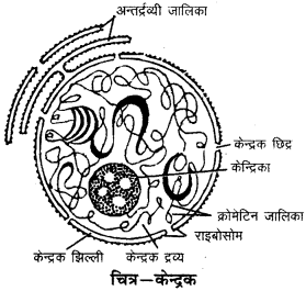 RBSE Solutions for Class 9 Science Chapter 6 सजीव की संरचना 3