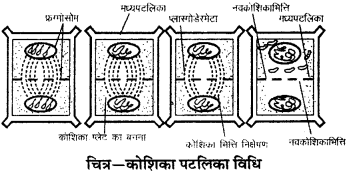 RBSE Solutions for Class 9 Science Chapter 6 सजीव की संरचना 5