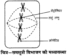 RBSE Solutions for Class 9 Science Chapter 6 सजीव की संरचना 6