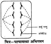 RBSE Solutions for Class 9 Science Chapter 6 सजीव की संरचना 7