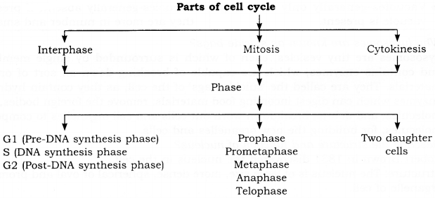 RBSE Solutions for Class 9 Science Chapter 6 Structure of Living Organisms 2
