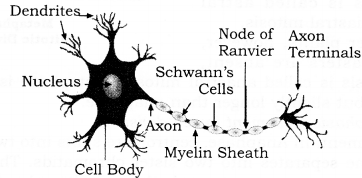 RBSE Solutions for Class 9 Science Chapter 6 Structure of Living Organisms 5